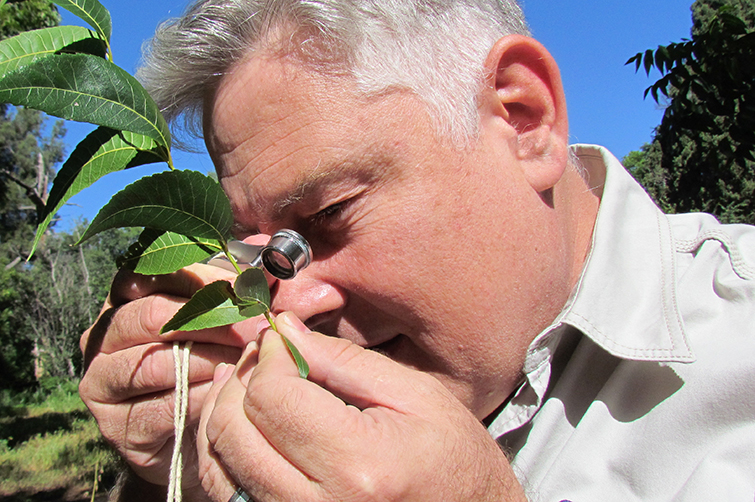 Gert Marais looking at pecan leave_