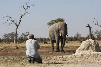 Description: Mr Butler taking a picture of Loxodonta africana, the African Elephant Tags: Mr Butler and Loxodonta africana