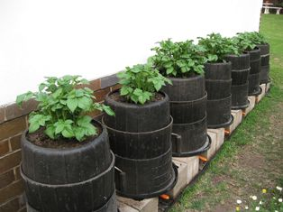 Food Garden Projects