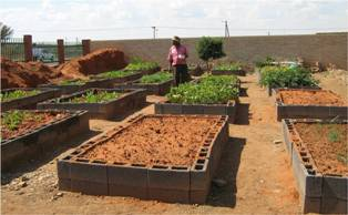 Description: Service Learning Keywords: growing vegetables, food gardens, trench-beds, raised beds, MUCPP Community Health Centre,