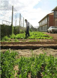 Description: Service Learning Keywords: Reach Heidedal, food gardens