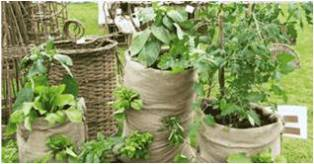 Description: Service Learning Keywords: growing vegetables, easy, vegetables in bags