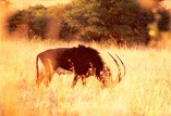 Description: INORG2009 Keywords: Photo, Buck